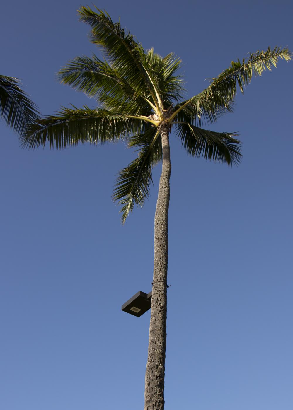 Solar Luminaire on Palm Tree -First Light Technologies